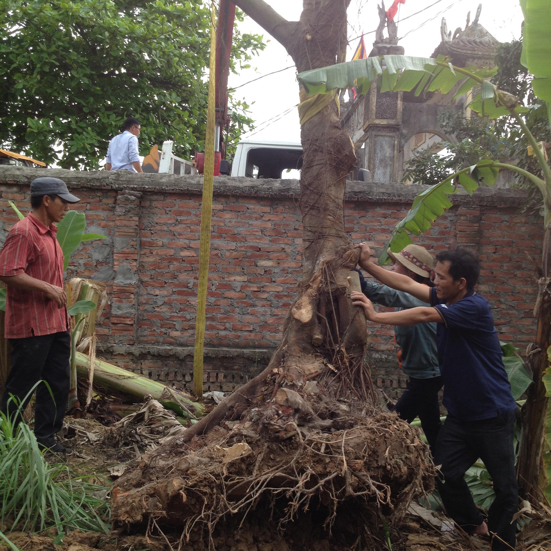Dịch vụ cung cấp cây xanh công trình chuyên nghiệp
