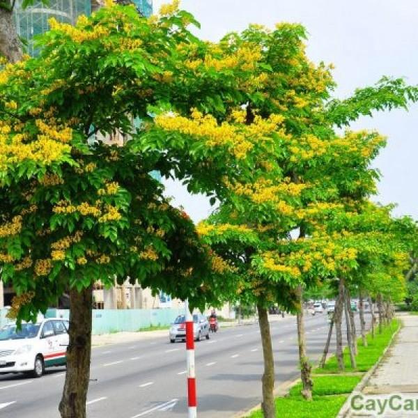 Kỹ thuật trồng cây - Bạn cần biết